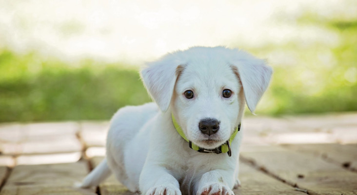 Dog or cat owner? This academic researcher wants to collect your pet's fleas