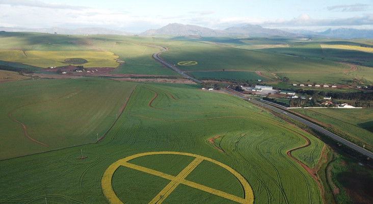 SPOTTED: Crop circles in the canola fields of Caledon