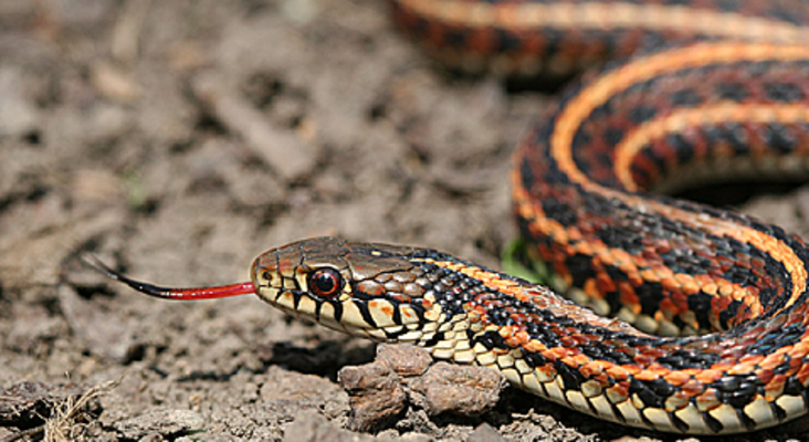 CT's Imhoff snake park appeals for donations to make big move