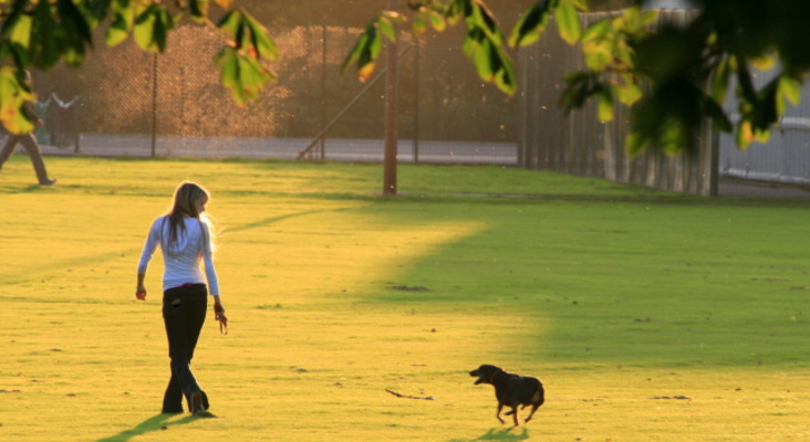 Walking your dog can be more complicated than you think