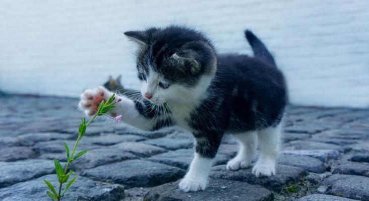 [LISTEN] Whackhead Simpson's cat prank makes restaurant owner so Hornee
