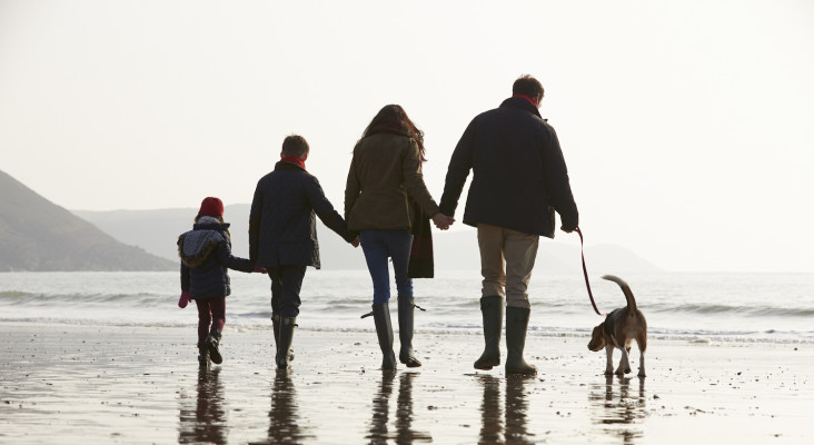 Who gets custody of the dog in a divorce?