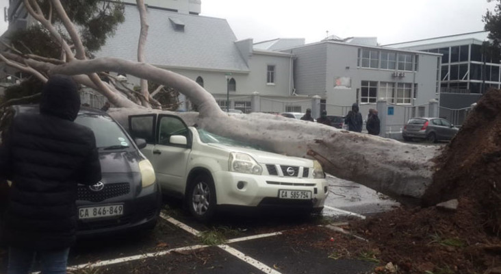 Gale-force winds rip up trees, as heavy rain lashes Cape Town