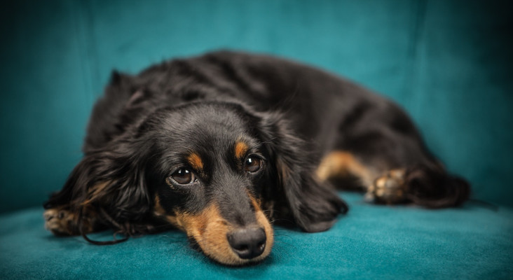 Whackhead's Prank: Finding a new home for Mr Sweet Sausage Dog