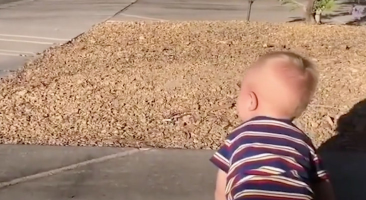 [WATCH] Adorable moment as one-year-old attempts to tell dad he loves him