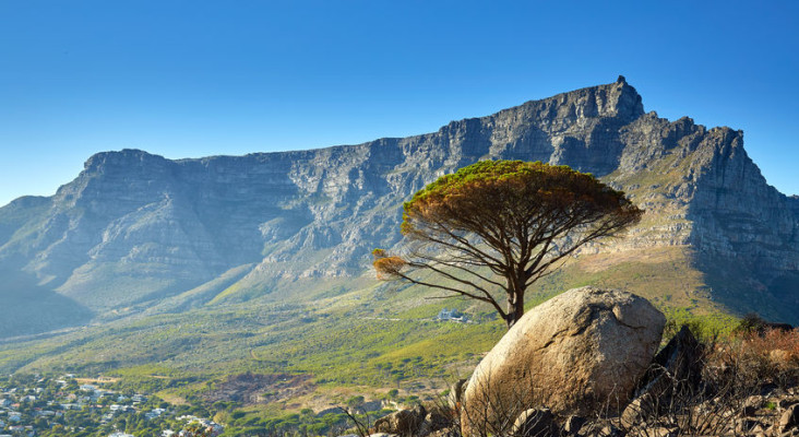 Fire season: Save the 'stompie hotline' on your phone – Cape Town needs you!