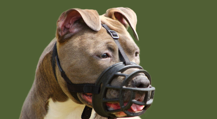 Your biting dog is your legal responsibility whether you're there or not - Court