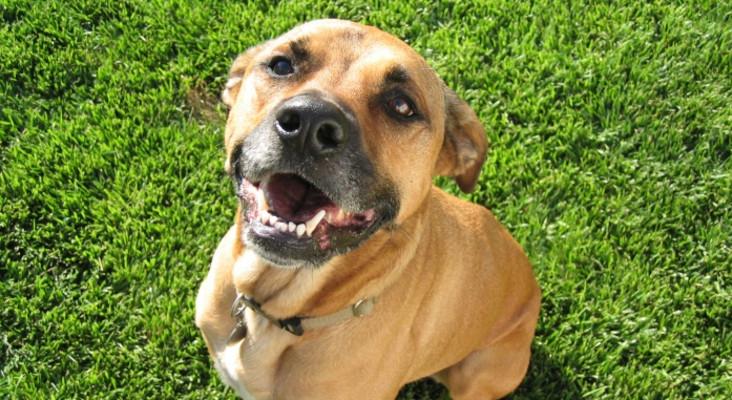 Feel Great Fitness Guide: Vineyard Doggy Walk at Blaauwklippen in aid of HAWS