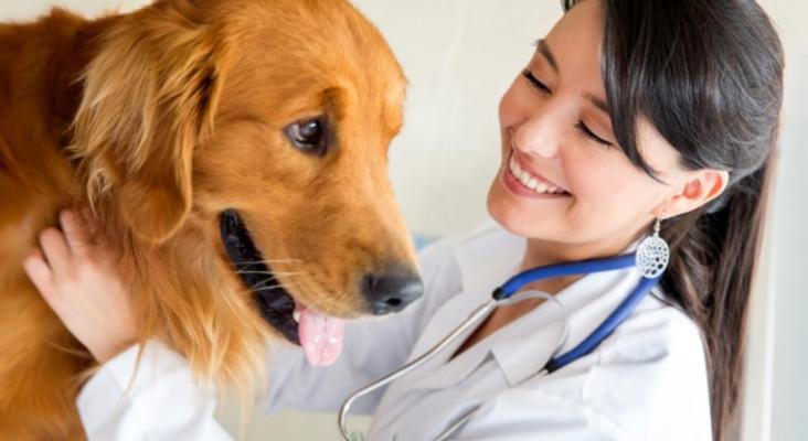 Senseless Survey: Why don't we call veterinarians 'dogtors'?