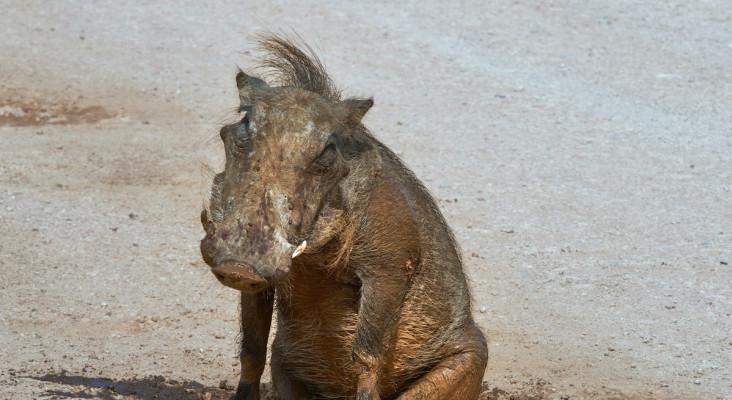 Whackhead's Prank: You're the guy that killed my warthog
