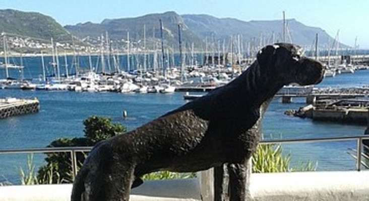 R5000 reward for info or return of Simon's Town's Just Nuisance statue parts