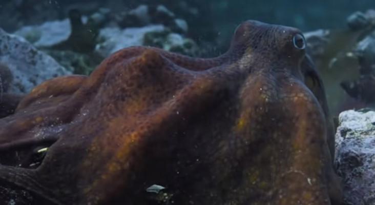 SA''我的章鱼老师'赢得奥斯卡的最佳纪录片