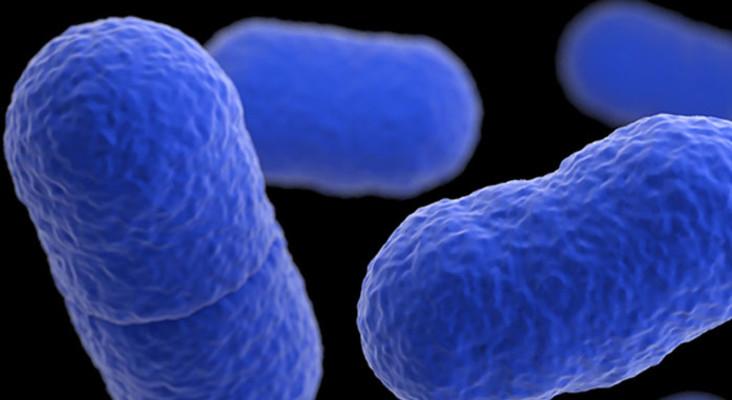 Gauteng Health Department 'getting a grip on listeria'