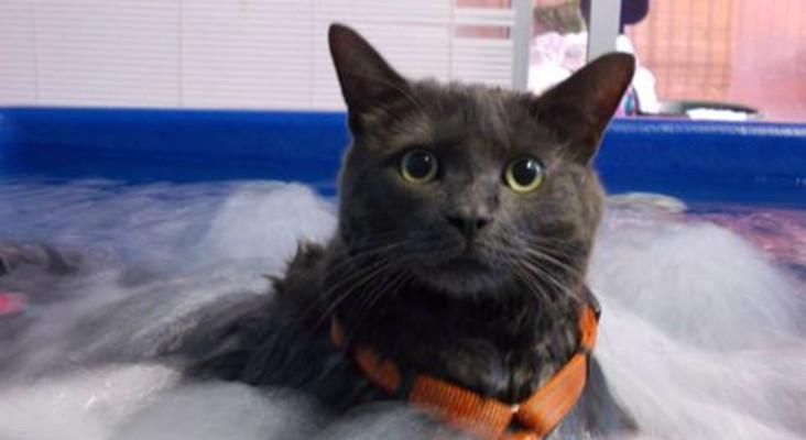 Animal gym rehabilitates Cape's beloved pets