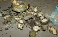 Two suspects were arrested after police found abalone and shark fins on premises in Edgemead. Picture: Twitter/@SAPoliceService.