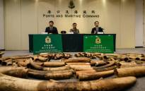 Seized elephant ivory tusks are seen during a press conference at the Kwai Chung Customhouse Cargo Examination Compound in Hong Kong on 6 July  2017. Picture: AFP