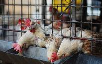 China has detained 10 people for spreading rumours about the bird flu virus as the death toll reaches 9.