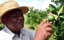 The late leader Philip Kgosana. Picture: @BikoFoundation