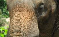 Mosha the elephant stepped on a landmine along the Thai-Myanmar border 10 years ago. Picture: Freeimages.com.