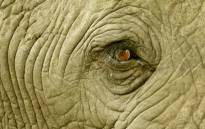 FILE: An elephant close up. Picture: Conservation Action Trust