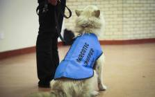 A dog takes part in a drug awareness campaign given by the Dogs Against Drugs SA. Picture: Cindy Archillies/EWN