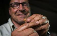 Professor Peter Schmid examines a fossilised H. naledi tooth from the Rising Star Expedition dig.