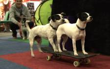 Skateboarding tricksters having a bit of fun at World of Dogs and Cats. Picture: Louise McAuliffe/EWN