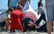 FILE: Volunteers try to assist one of the 19 beached pilot whales at Noordhoek beach in Cape Town on 24 March 2013. Picture: EWN