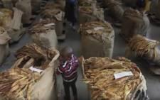 A screengrab showing a child at one of Zimbabwe's tobacco farms. Picture: YouTube.