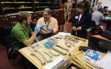 The fossils were taken to Wits University for examination. Here Chris Walker, Damiano Marchi and Pianpian Wei compare femora.