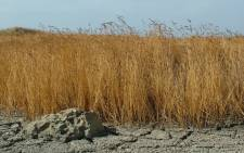 FILE: Drought. Picture: Freeimages.com.