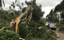 This photo taken on 23 August 2017 shows damaged trees and branches on the ground after strong winds and heavy rain caused by Typhoon Hato in Zhuhai. Picture: AFP