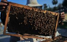 A rack of honey-bees. Picture: AFP