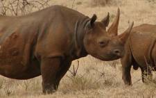 South Africa lost over 1,000 rhinos to poaching last year, predominantly in the Kruger Park and in KwaZulu-Natal. Picture: Supplied.