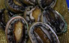 FILE: Poaching of abalone, also known as perlemoen, is rife in the Western Cape, as it fetches steep prices on the black market. Picture: Wikimedia Commons.