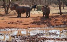 Rhino on the game farm belonging to alleged poaching kingpin Dawie Groenewald. Picture: Taurai Maduna/EWN