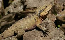 Reptiles are part of a growing number of endangered species. Picture: Pixabay.com
