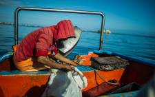 A fisherman looks at his catch in the village of Paternoster. Picture: AFP.
