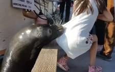 A screengrab of the sea lion attack.