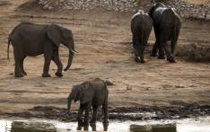 African elephants in Hwange National Park in Zimbabwe. Picture: AFP