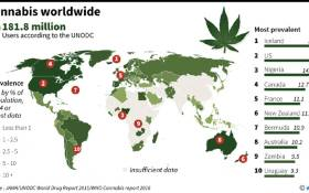 Graphic on estimated prevalence of marijuana use around the world.