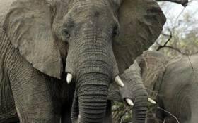 Elephants in South Africa's Kruger National Park. Picture: Alexander Joe/AFP