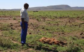 A farmer in the Free State stands next to a carcas of a cow that was lost in the drought.  Picture: Christa Eybers/EWN.