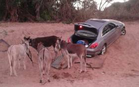 FILE: Police investigating after another vehicle was recovered in Limpopo River. Picture: @SAPoliceService/Twitter.