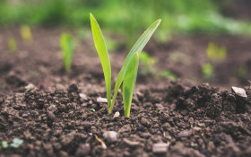 [LISTEN] Using climate-smart regenerative agriculture to feed poor communities