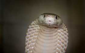 It's snake season! Here's what to do/who to call if you come across one at home