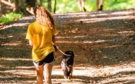 Doggie Bagz ensures your pooch get the treats it deserves
