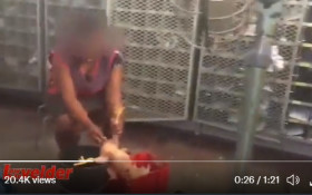 WATCH: Post Office workers caught plucking chickens in the sorting room go viral