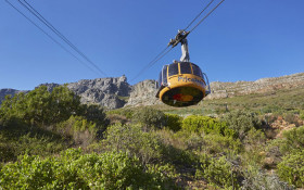 Toursim Month: CT Tourism has discounts and free access for those vaccinated