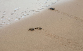 Senseless Survey:  If a turtle doesn't have a shell, is he homeless or naked?